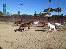 Centennial Parklands Horse Ride