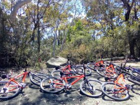 bike hire cycle way nsw central coast