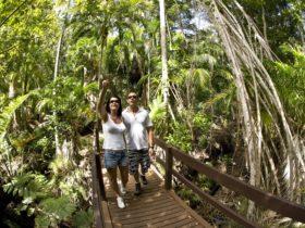 Bushwalking Lord Howe Island