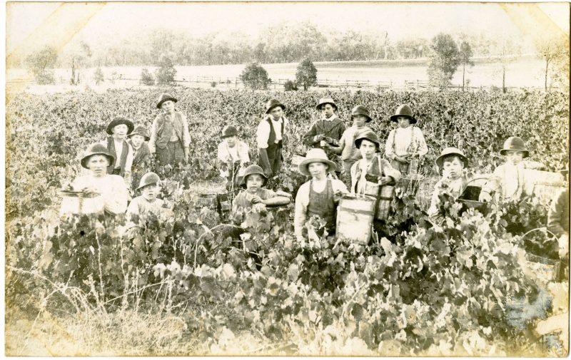 Albury vineyard History