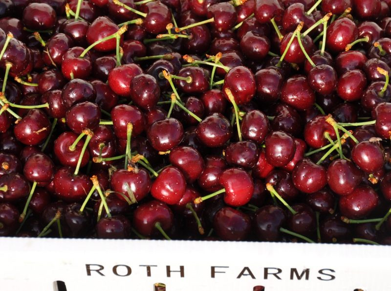 Cherries at Roth Family Orchard