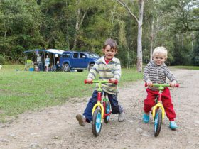 Family-friendly camping on the Telegherry RIver in Chichester State Forest