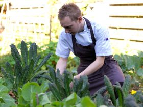 The kitchen garden is regularly harvested to form the basis of the seasonal menu.