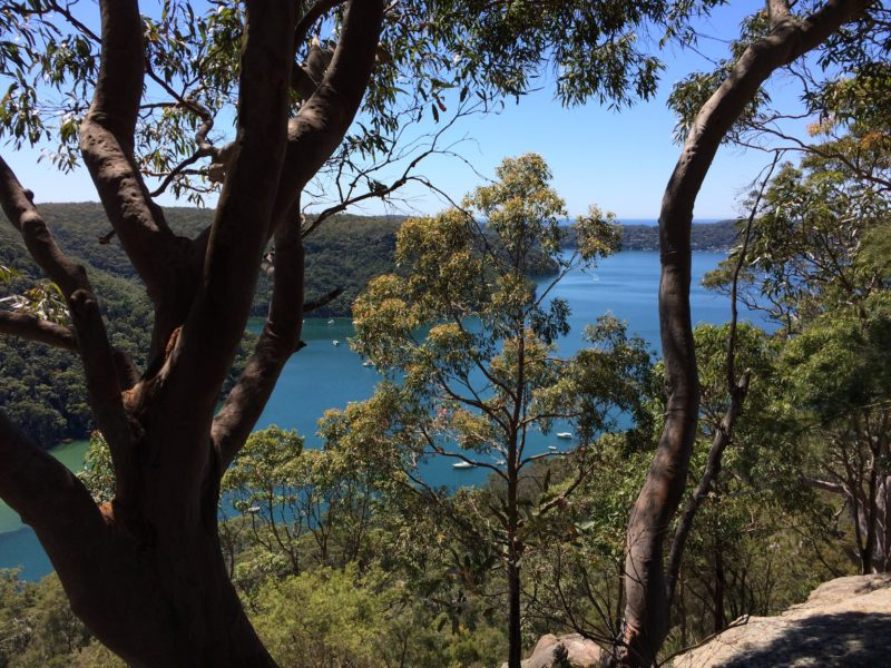 View from the walk along Elvina Bay Track