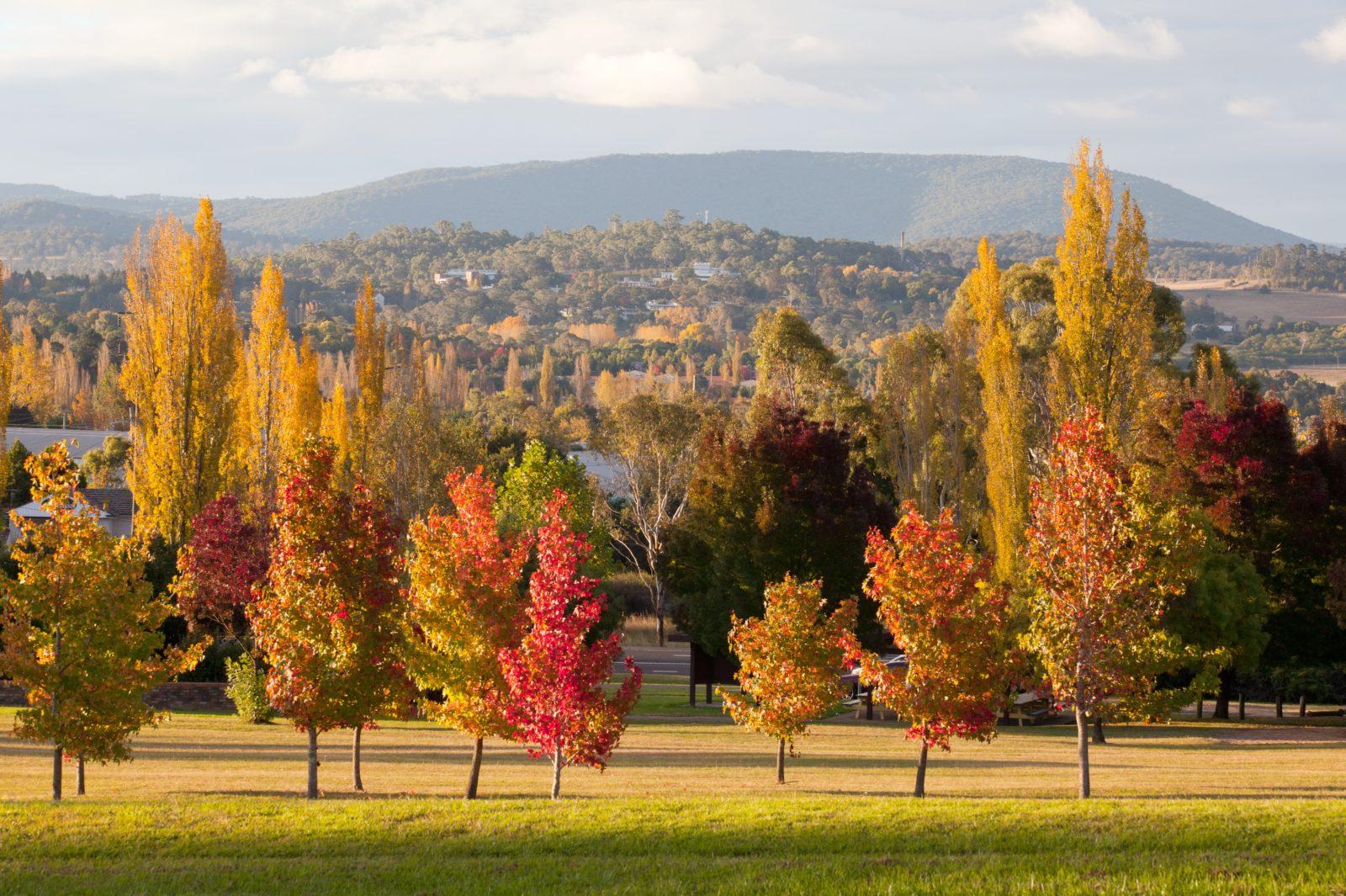 Armidale in Autumn