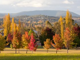 Armidale in Autumn