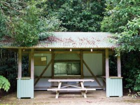 Coachwood Picnic Area, Washpool National Park. Photo: Rob Cleary
