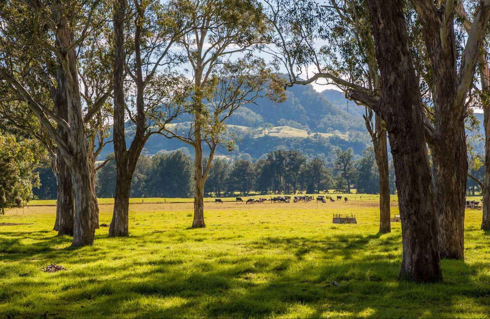 Coast to the Highlands scenic drive - Kangaroo Valley. Photo: Michael Van Ewijk
