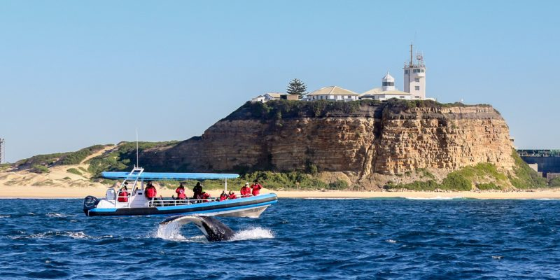 Coastal Sightseeing and whale watching on the Hunter Coast