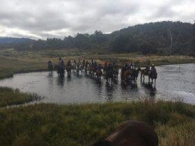 Cochran Horse Treks