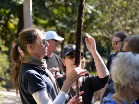 Tactile activity for traveller with sight loss, holding a 2 metre tall spear like grass tree flower