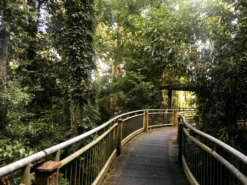 The carpeted boardwalk through the rainforest gives you the opportunity to see over 150 bird species
