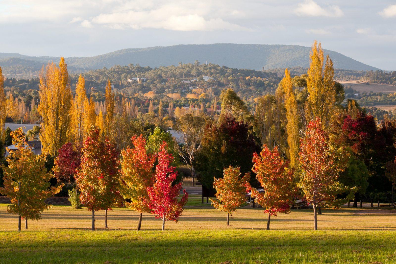 Autumn in Armidale