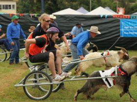 Comboyne Show Mountain Goat Races
