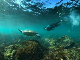 Snorkelling with turtle at cook island