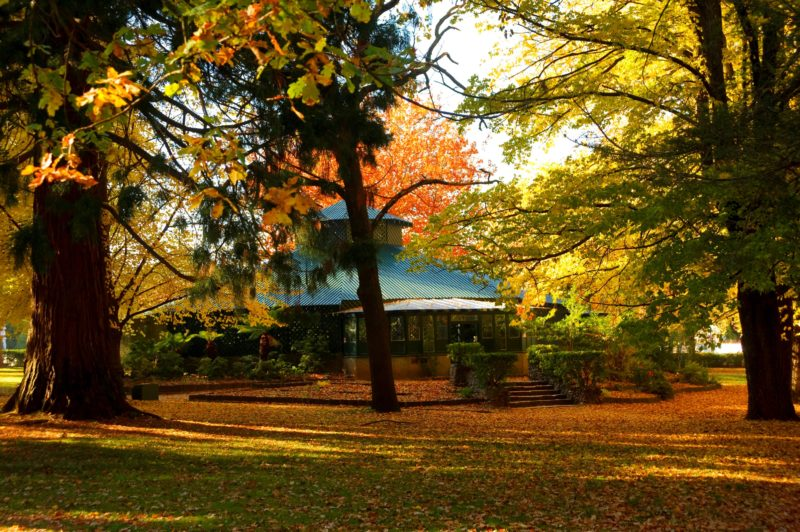 The Fernery in Autumn, Cook Park Orange