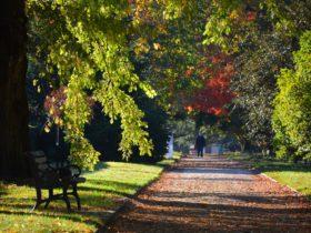 Cook Park heritage walk