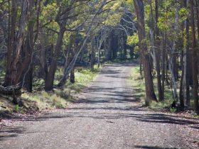 Coolah Tops National Park
