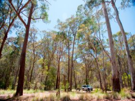 Coolah Tops National Park Camping