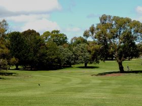 Cooma Golf
