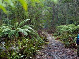 Corn Trail walking track path, Monga National Park. Photo: Lucas Boyd