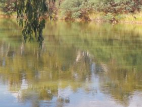 Murray River at the Corowa Common
