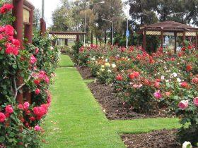 Cowra Rose Garden
