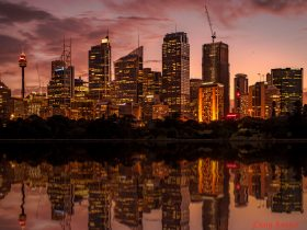 Sydney CBD from Mrs Macquaries Point