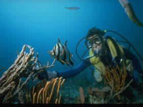 Crest Diving