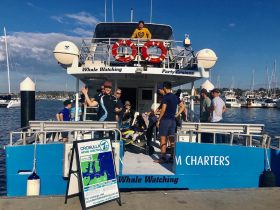 Cronulla whale watching tours Cronulla Sydney