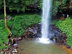 Crystal Shower Falls, Dorrigo National Park. Photo: Rob Cleary