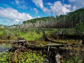 Cudgen Nature Reserve