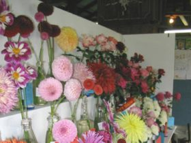 A Colourful Display