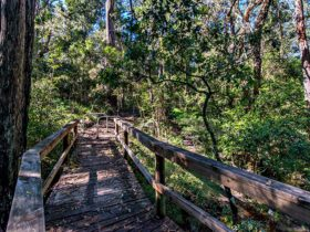 Dawson River walking track, Brimbin Nature Reserve. Photo: John Spencer