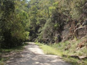 Devines Hill Loop