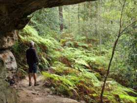Dharug National Park