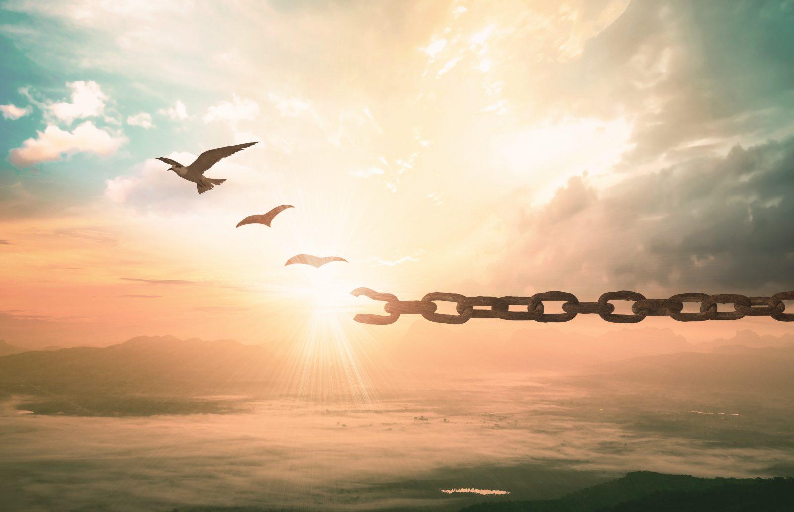 birds flying break free chains