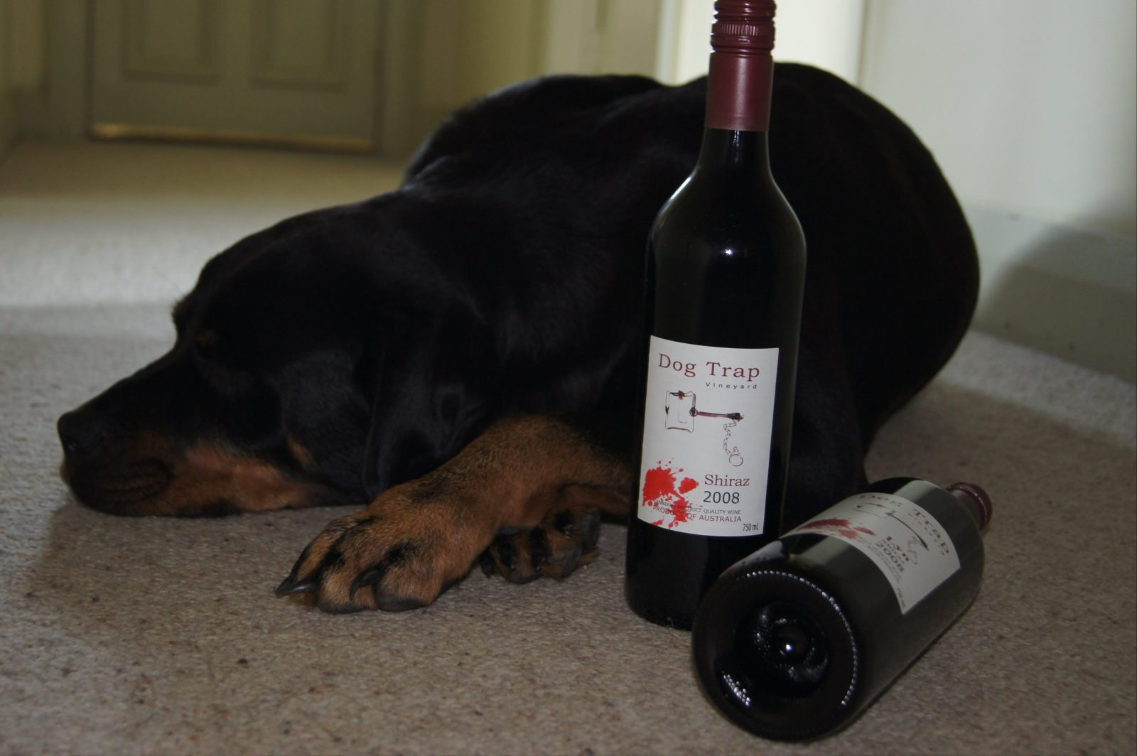 Dog Trap's wine and their dog