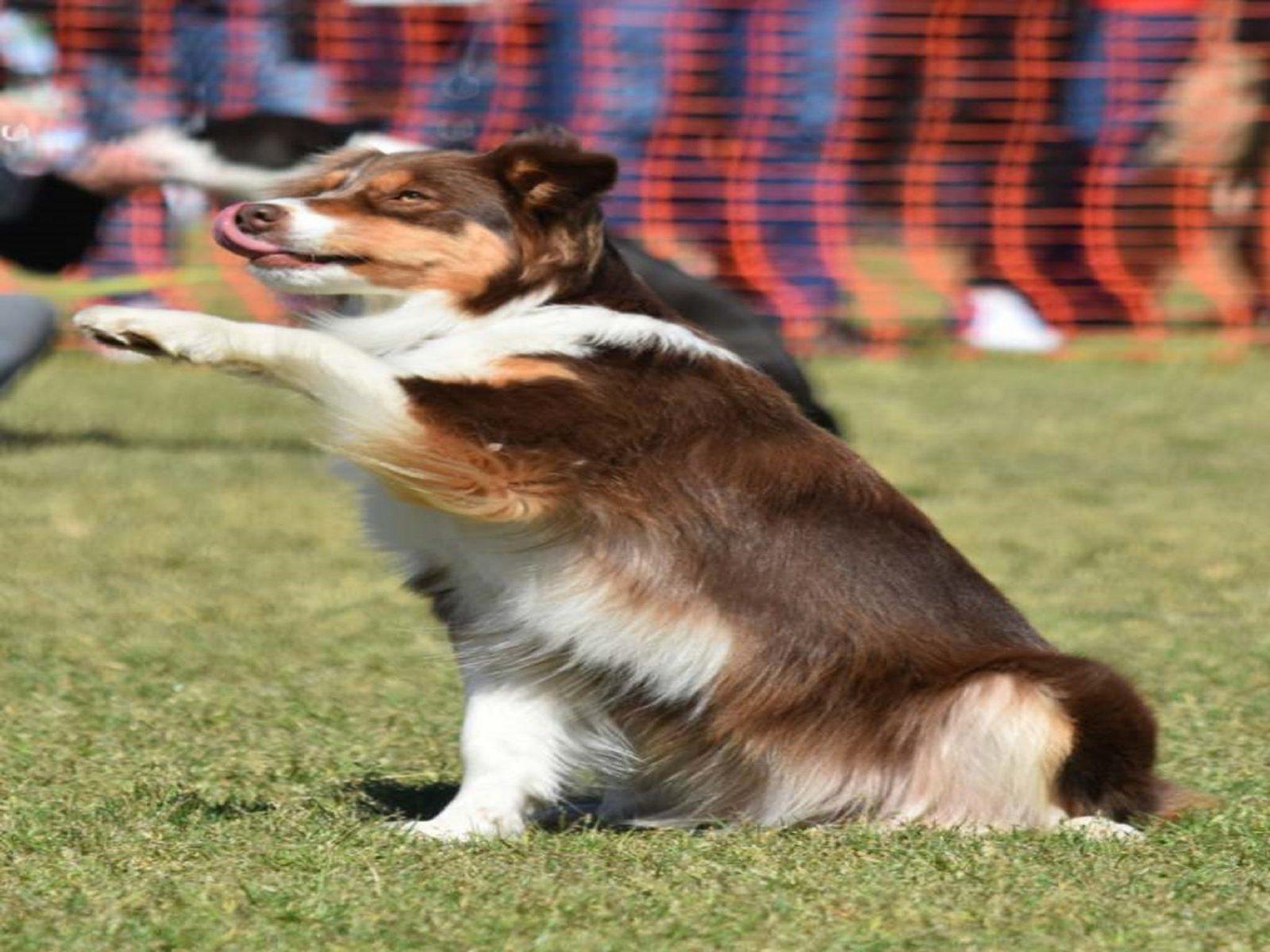 Dog trick