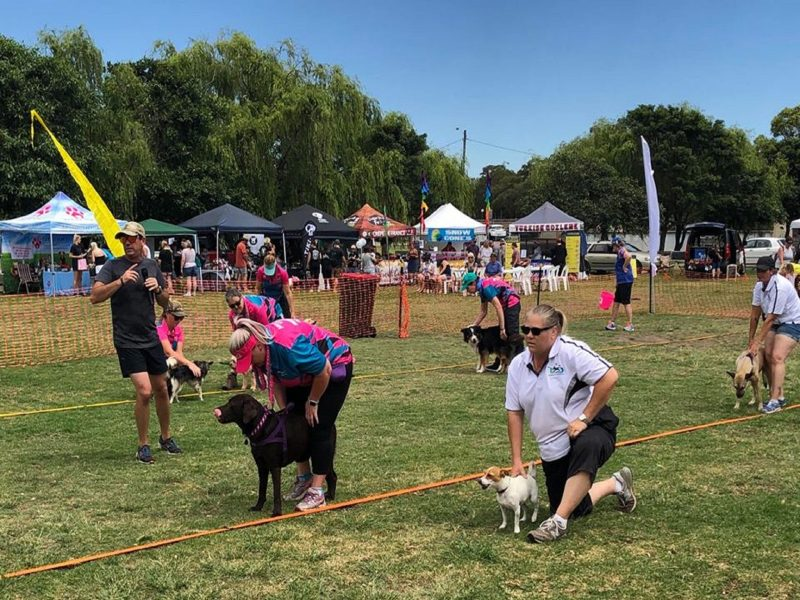 Dogs in the Park BSW