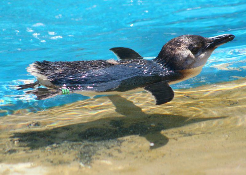 Dolphin Marine Magic