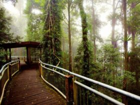 Walk with the birds, Dorrigo National Park. Photo: Rob Cleary