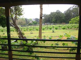Vineyard from House - Douglas Vale Historic Homestead