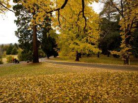 Duntryleague in Autumn