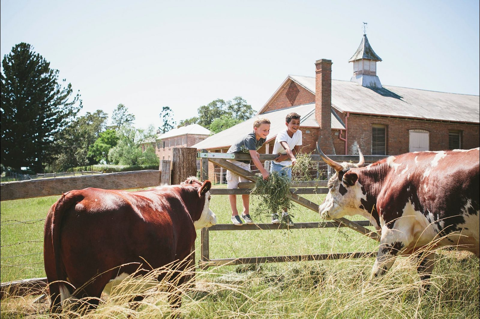 Family Farmyard Tour at Rouse Hill House & Farm