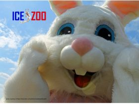 Easter at Ice Zoo