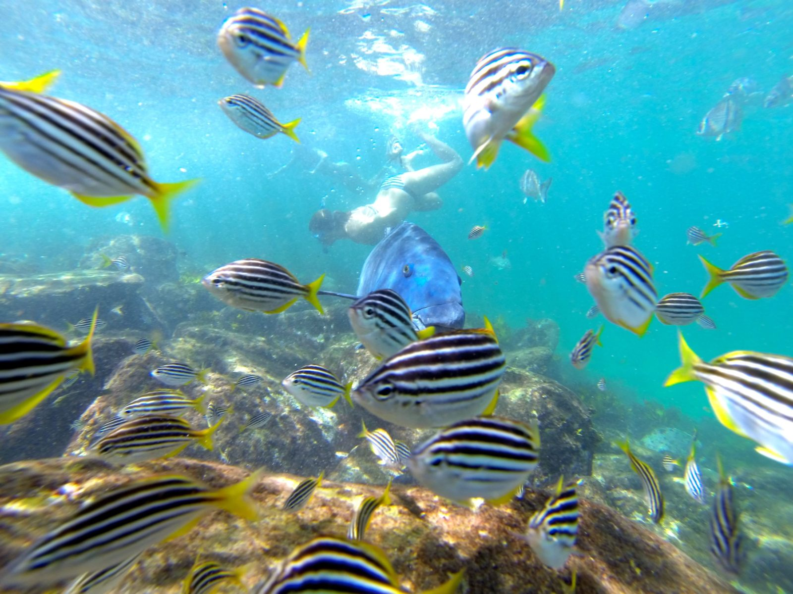 Manly Snorkeling Tour EcoTreasures