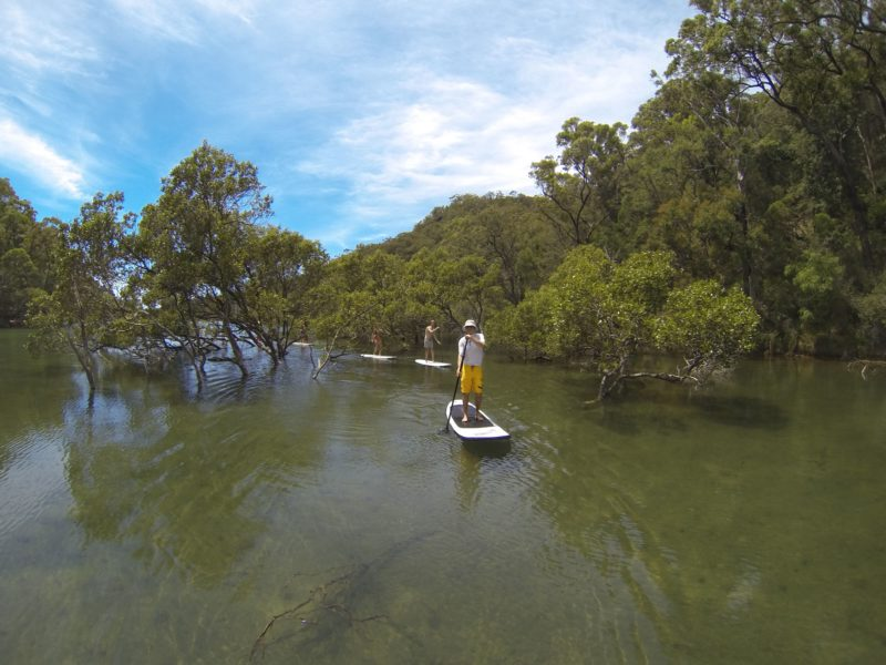 Stand Up Paddle Board Safari EcoTreasures