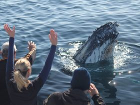 People watching a whale in the water at very close range