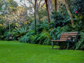 EG Waterhouse Camellia Gardens